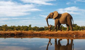 Elephant on Okavango, Botswana   Black Tomato