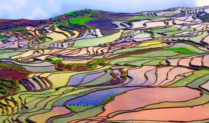 Rice terraces, Leijiang, China