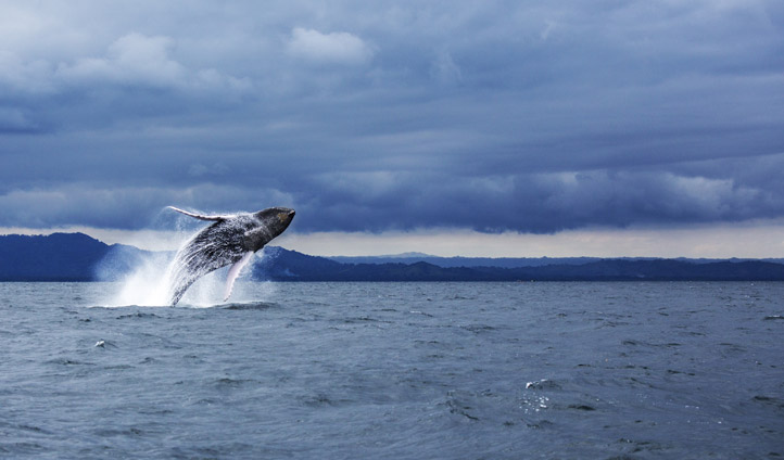 Whale watching in the Dominican Republic
