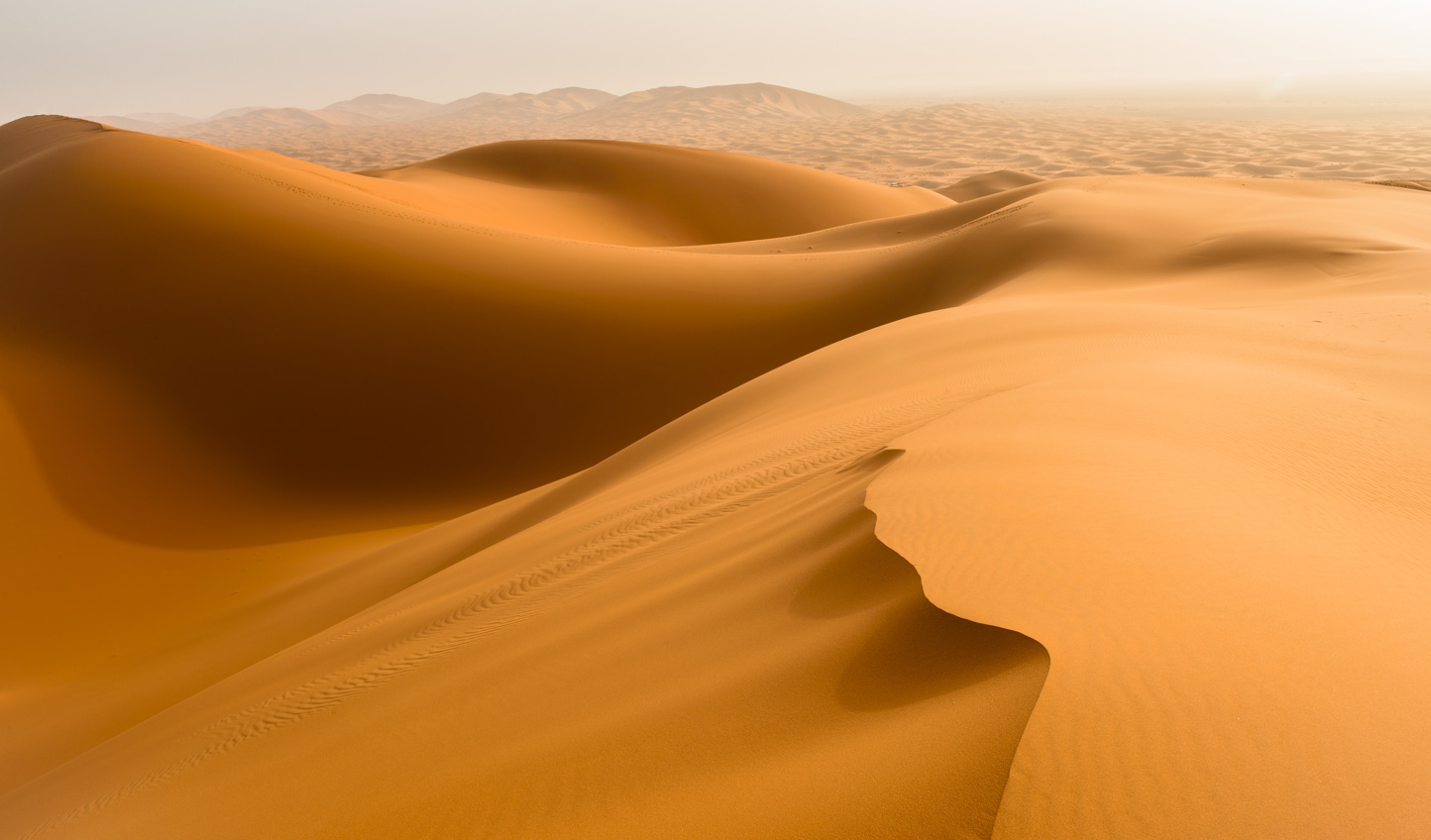 Climb atop the sweeping dunes of the Sahara
