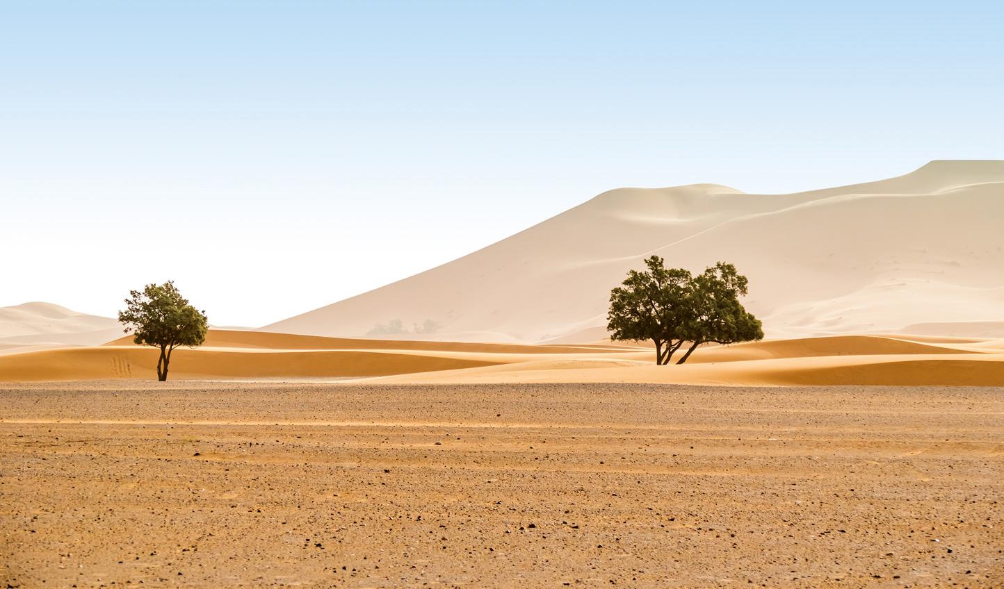 Head deep into the desert