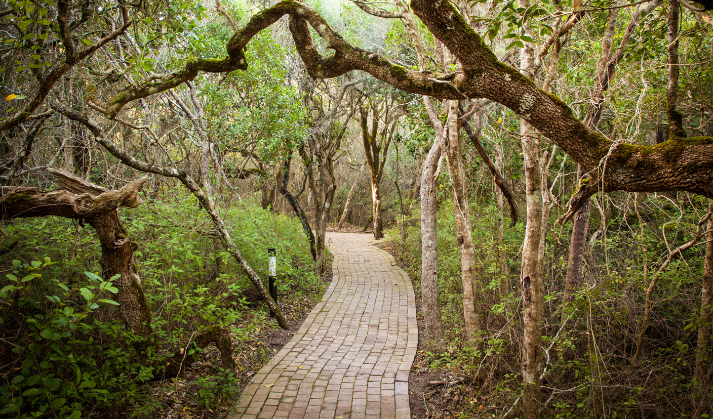 Wind your way through the forest to your luxury hideaway at Grootbos