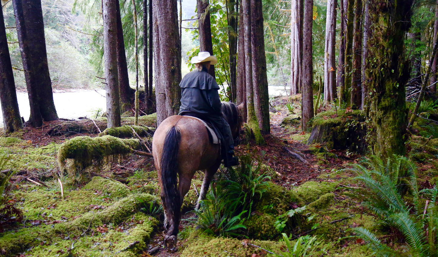 Set off on a horseriding trail through the forest