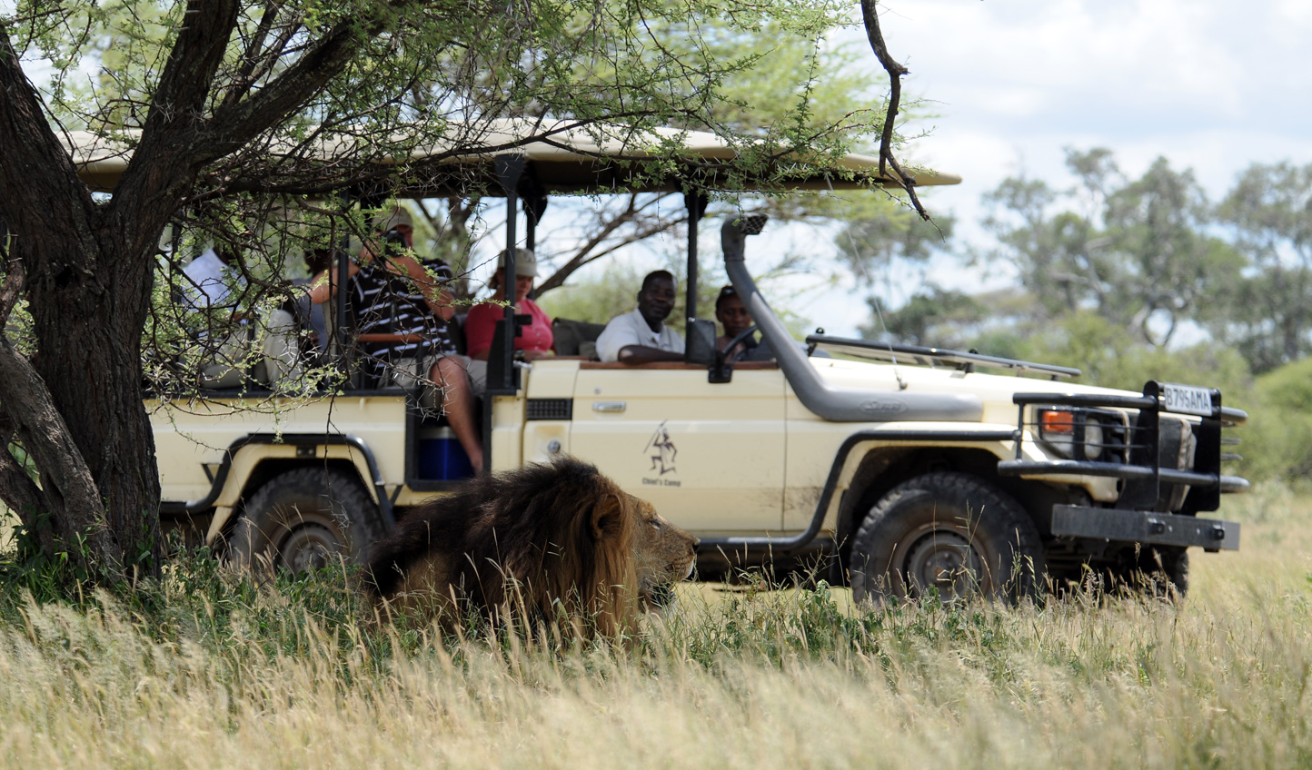 Head out on game drives