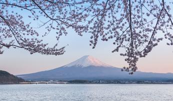 Cherry Blossom & Mt Fuji