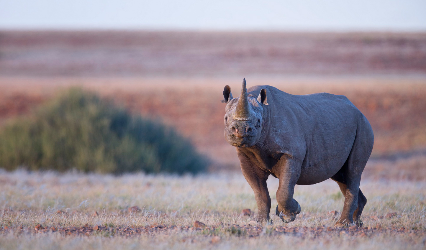 Track rare rhinos across the desert