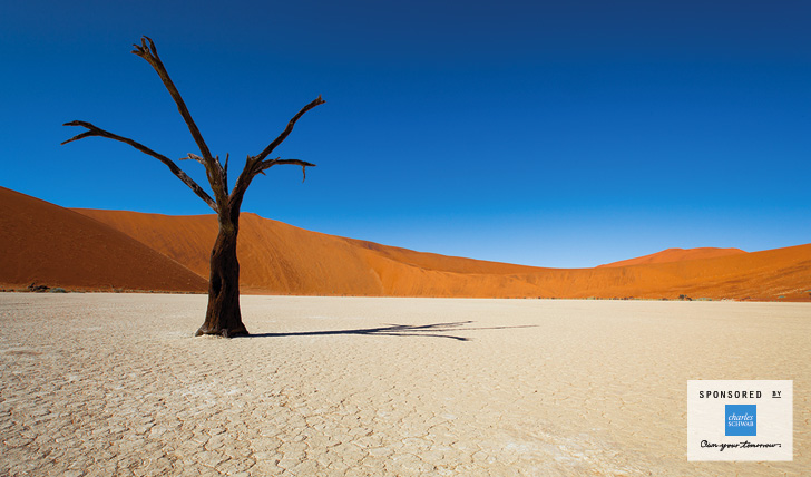 A tree in The Namib desert