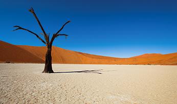 A tree in The Namib desert