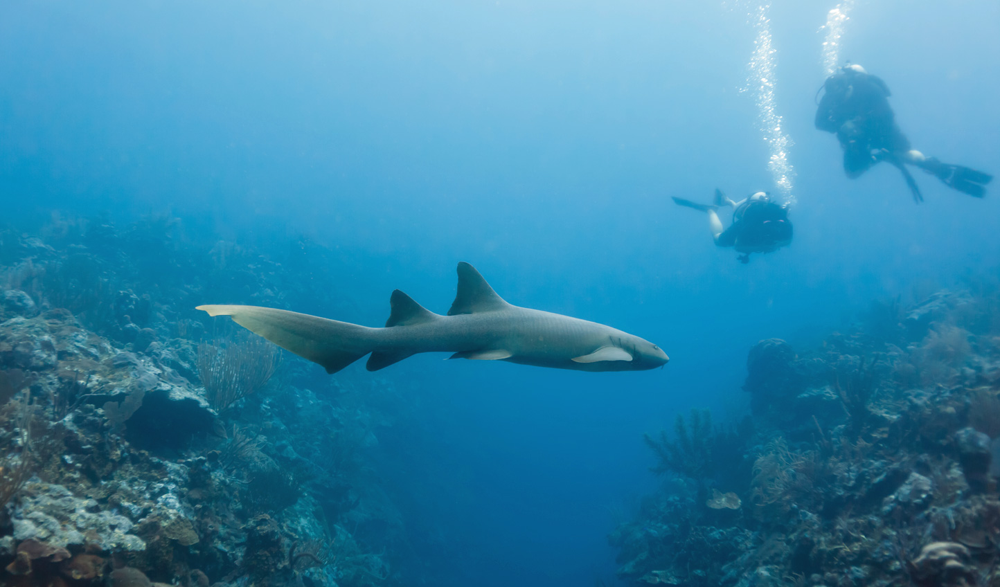 Head into the deep and explore Shark Ray Alley