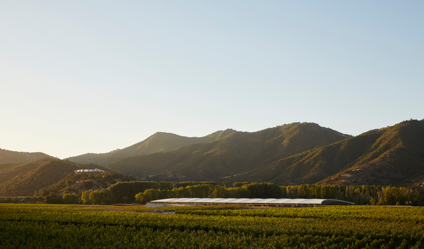 Head down to the vineyard and take a stroll through the vines