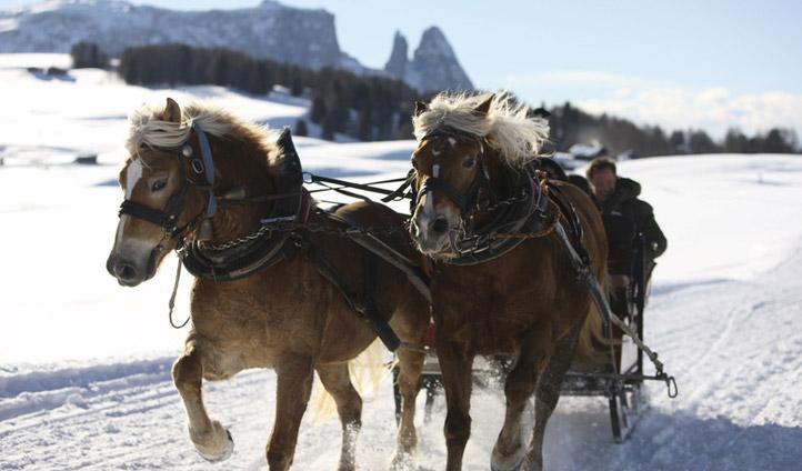 Horse sledding in South Tyrol