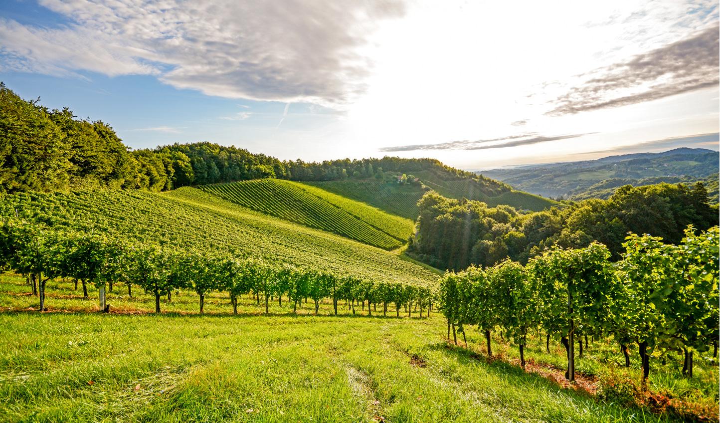 Escape to the vines of Rioja