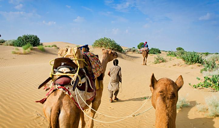 Embark on your camel safari