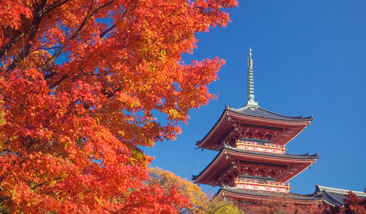 The vibrant colors of Kyoto in Autumn