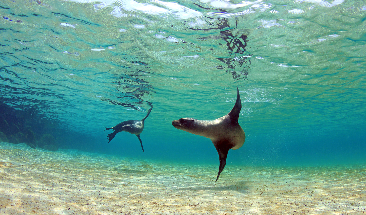 Swim with sea lions just offshore