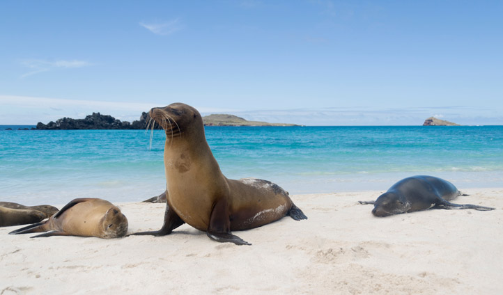 Holidays in the Galapagos