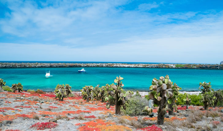 The pristine coastline of South Plaza Island in the Galapagos Islands