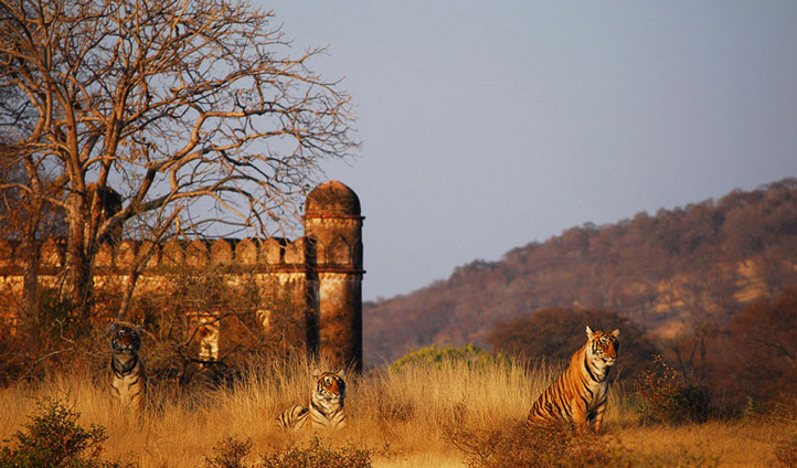 A place where tigers roam amid ancient fortresses