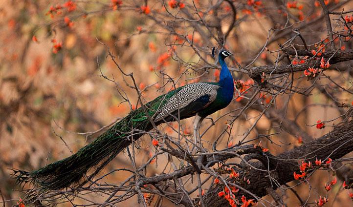 India nature holiday