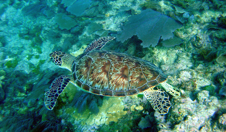 Wildlife in the Florida Keys, USA