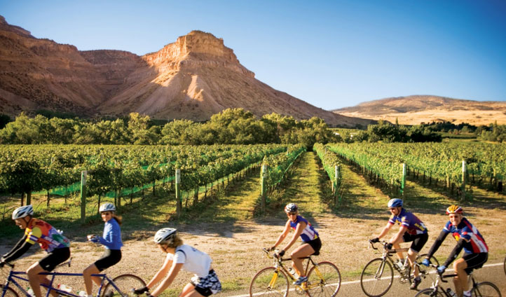 Cyclists by vineyards in Colorado