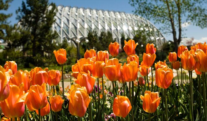 Denver's Botanical Gardens