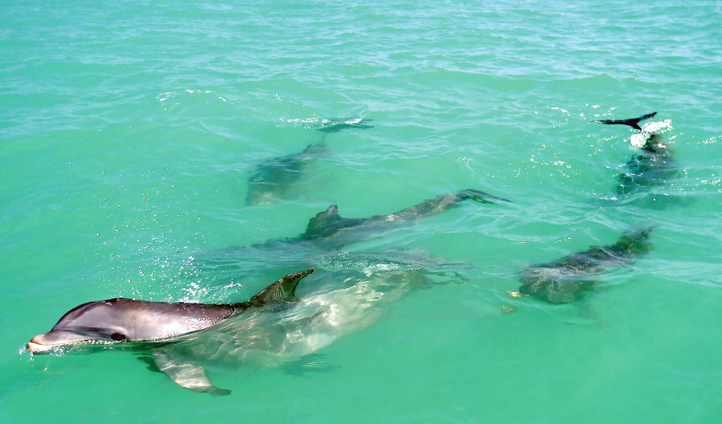Dolphins in the Florida Keys, USA