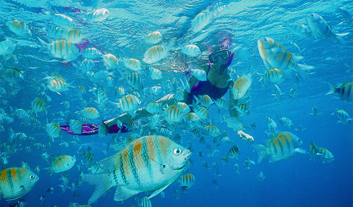 Snorkelling with tropical fish in the Florida Keys, USA