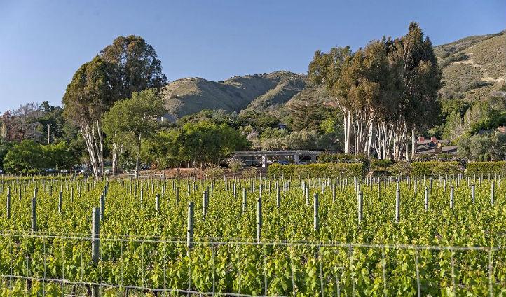 Explore Carmel Valley's Vineyards
