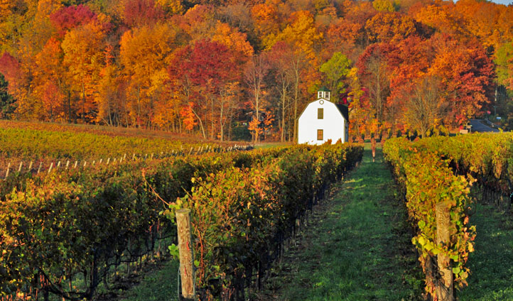 Vineyards of Niagara, Canada
