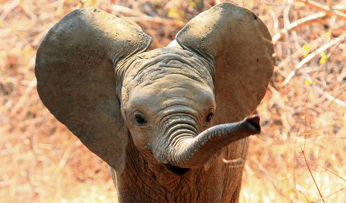 See elephants frolicking about in the Zambezi
