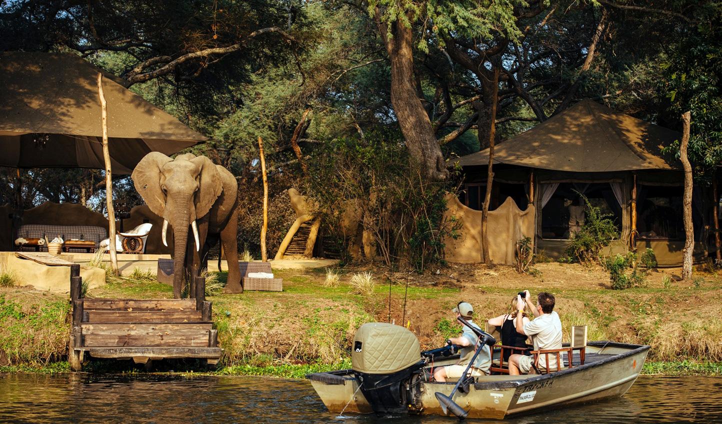 See elephants up close at Chongwe Camp
