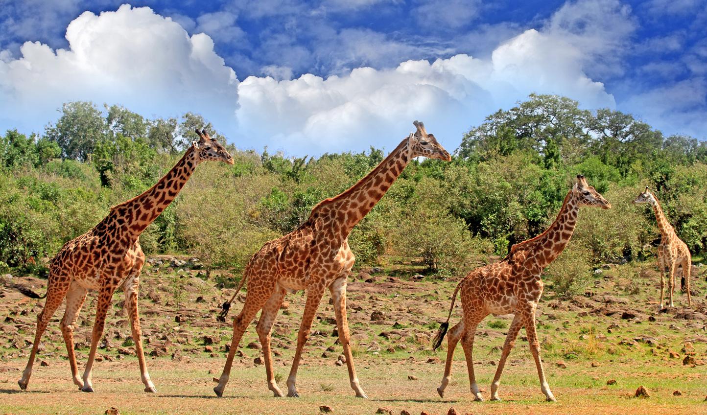 Time to start your Zimbabwe and Zambian adventure
