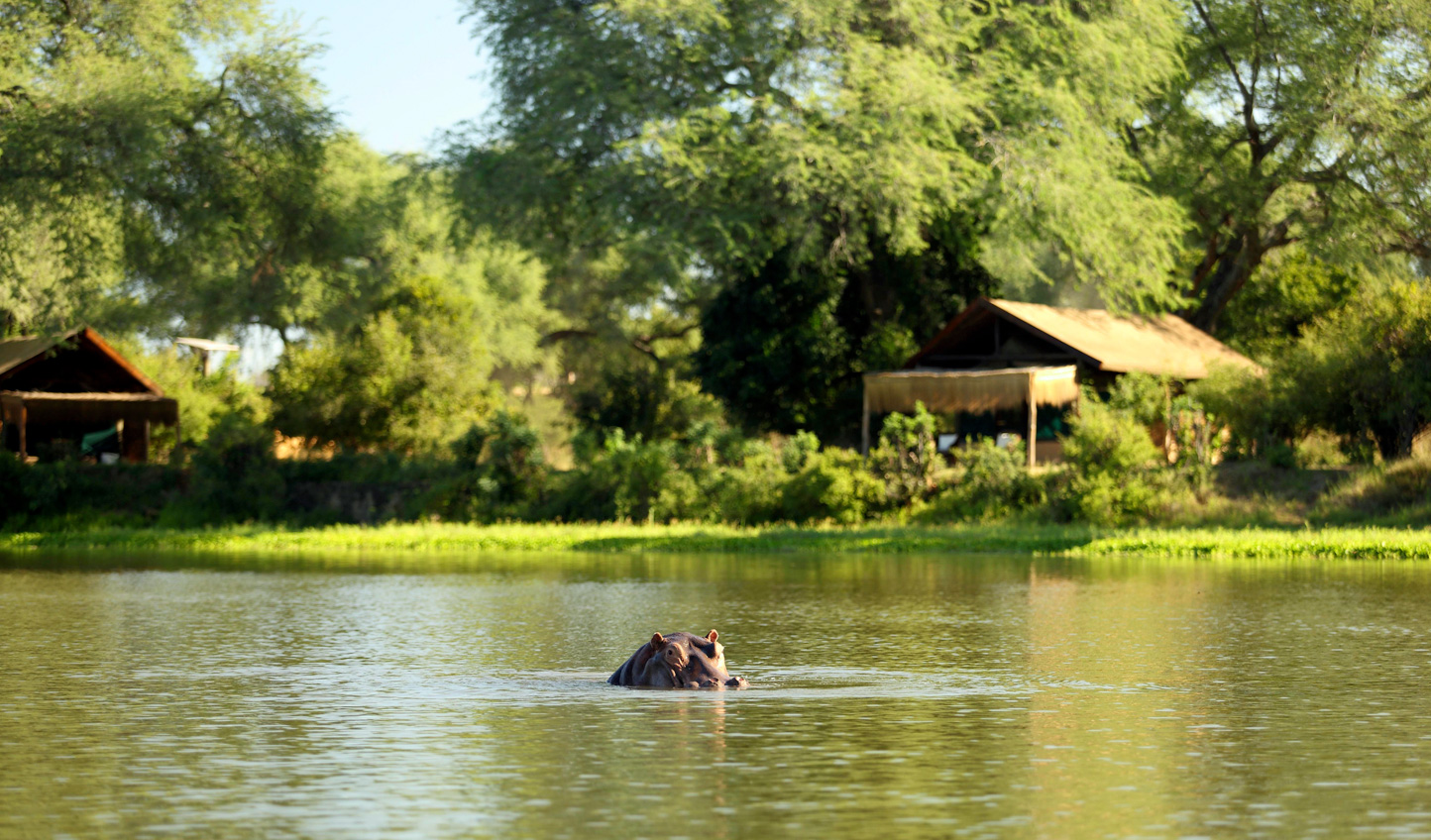 Spot hippos peering above the water