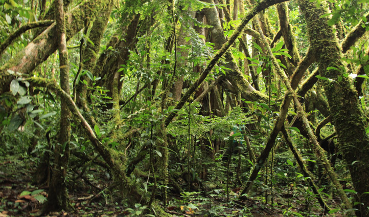 Explore Mount Bosavi Papua New Guinea Black Tomato