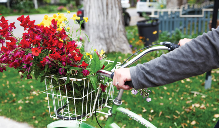 Biking around Aspen with Flowers