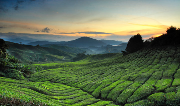 Admire the breath taking views of Cameron Highlands