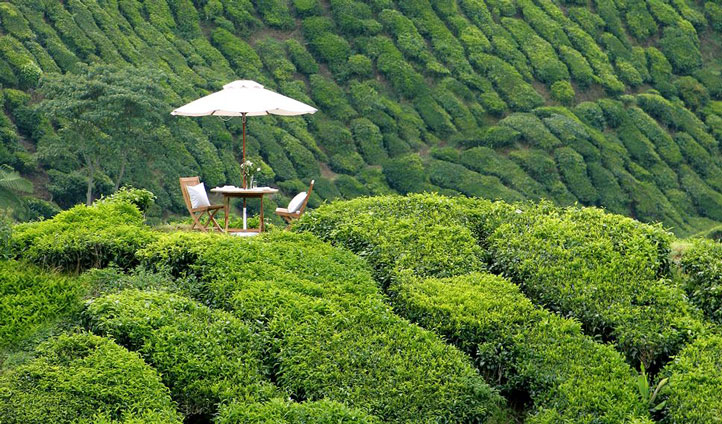 Enjoy an al fresco romantic dinner for two at Cameron Highlands Resort