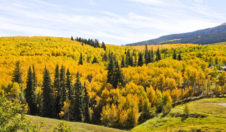 Fall foliage, Aspen Snowmass