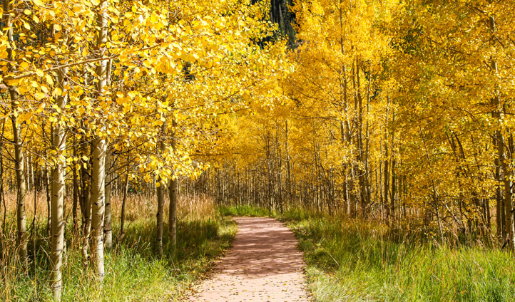 Fall foliage, Aspen trails