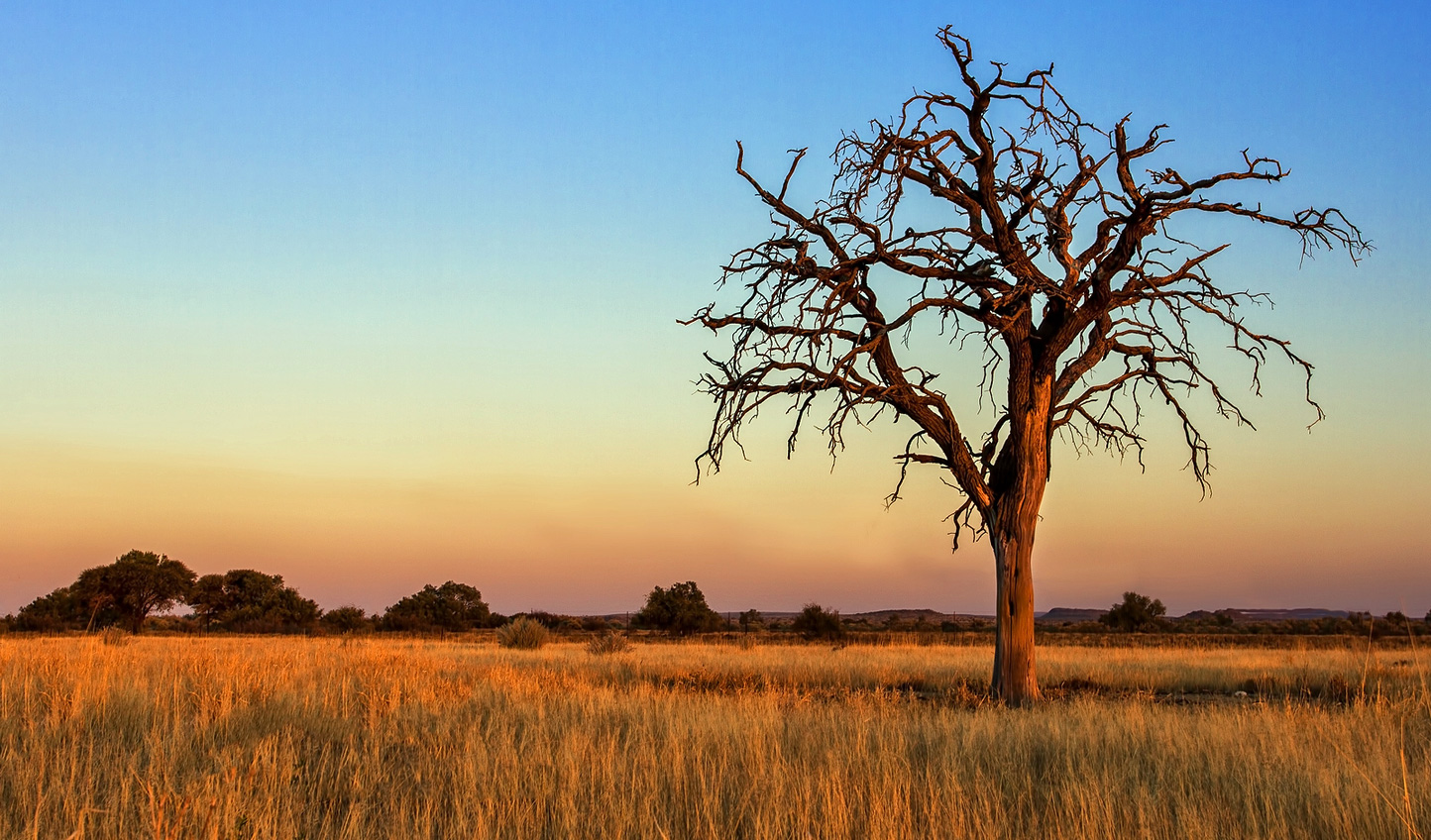 At one with the wilds of the Kalahari