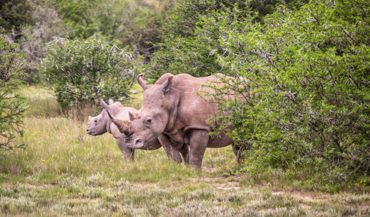 Rhinos in South Africa | Black Tomato