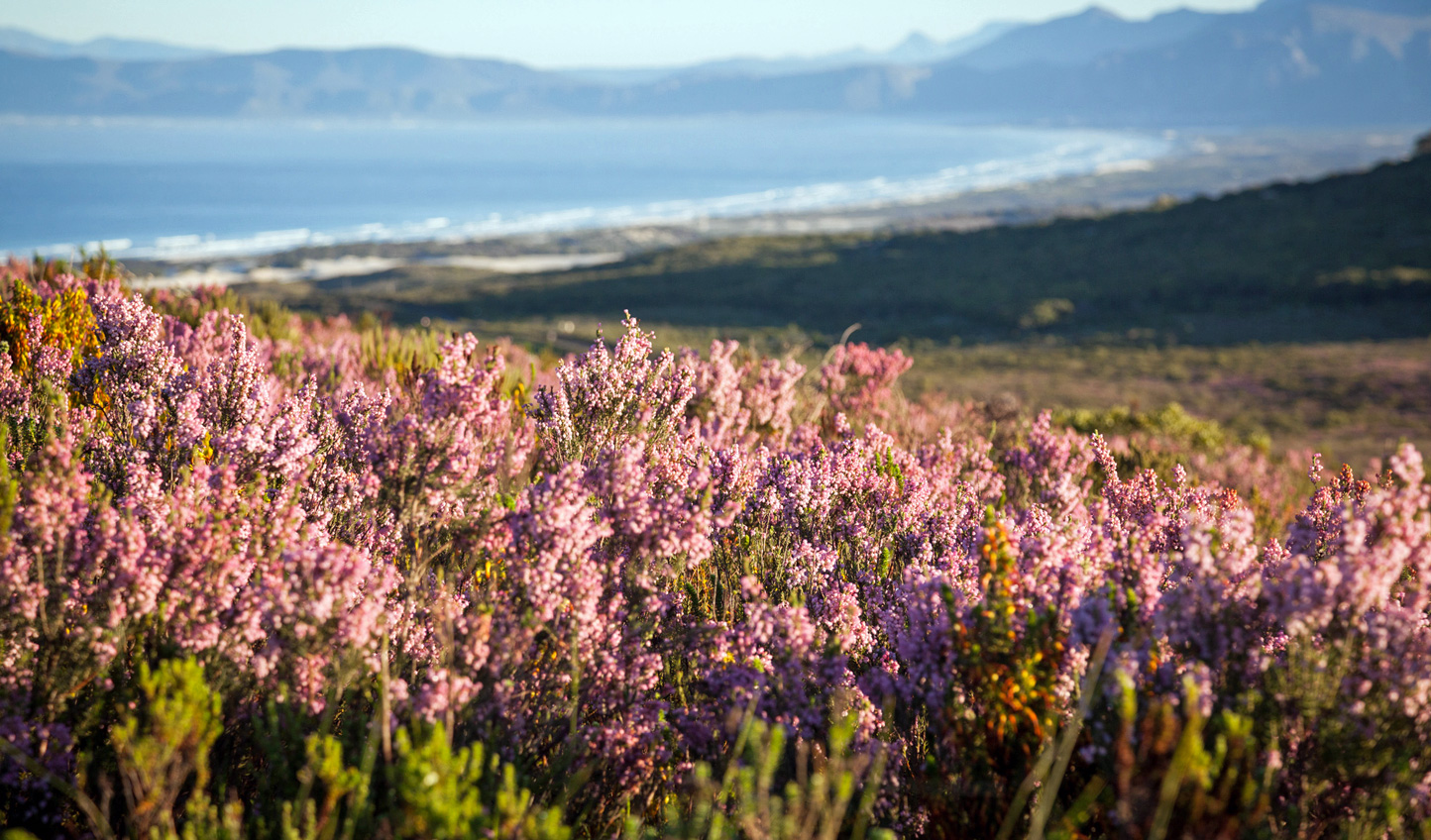 Switch fauna for flora on a Grootbos safari