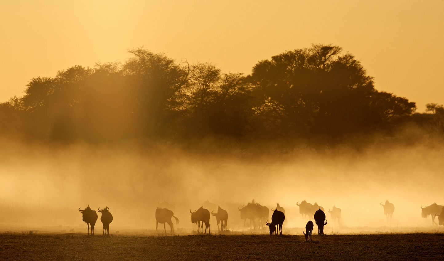 Tswalu is a real escape to the wild