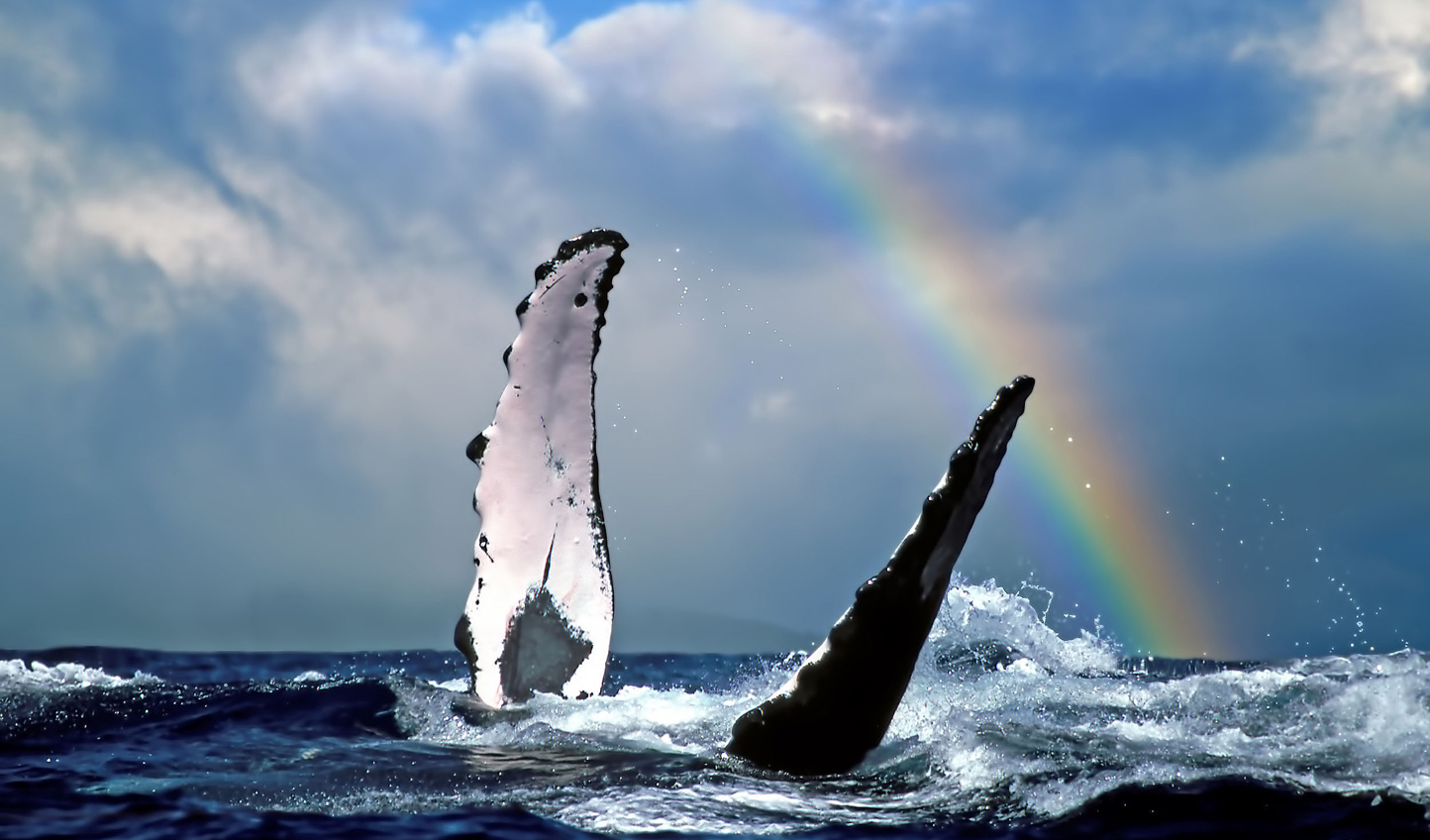 Time your visit right and catch sight of breaching whales