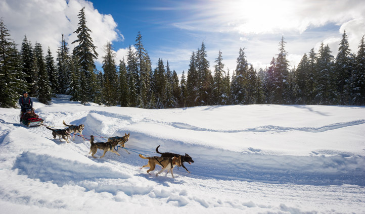Shoot across the snow on a dog-sledding tour