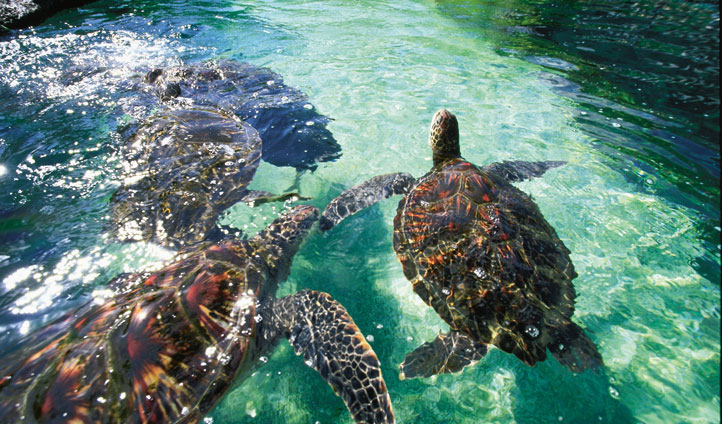Take out a canoe and bump into the sea turtles