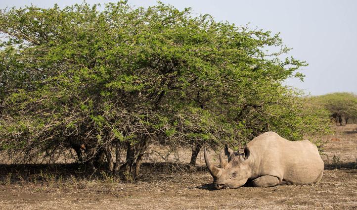 Rhino in KZN