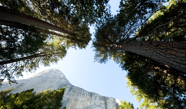 Look up on your trek through Yosemite Park