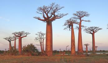 Madagascar-Thumb